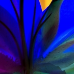 Blue Lily Photo