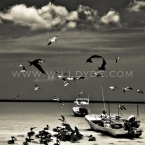 Holbox Fishermen - Will Dyde Photo Art