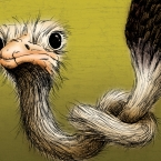 ostrich with knot in neck - 8x10 matted print illustrated by Alex Wijnen