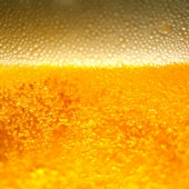 Beer Bubbles 8x12 Photo Print