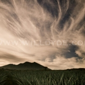 Agave Sky  - Will Dyde Photo Art