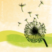 Dandelion Fluff (8x10 matted print pen & ink digital illustration Alex Wijnen)