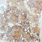 Fire and Ice, encaustic painting in golds, creams, whites, browns