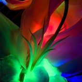 Neon Pepper Lily Photo