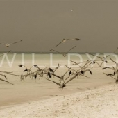 Taking Off - Will Dyde Photo Art