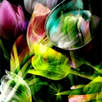Abstract Tulip Fine Art Photograph