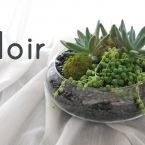 A modern dish garden with deep green succulents and balls of moss set against st