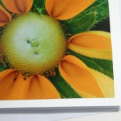 Flower Photo Note Card